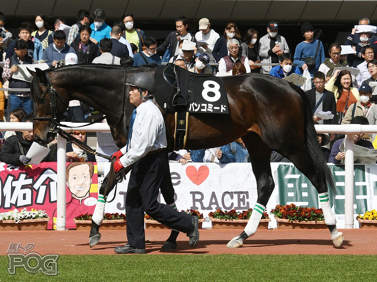 パンコミードの馬体写真