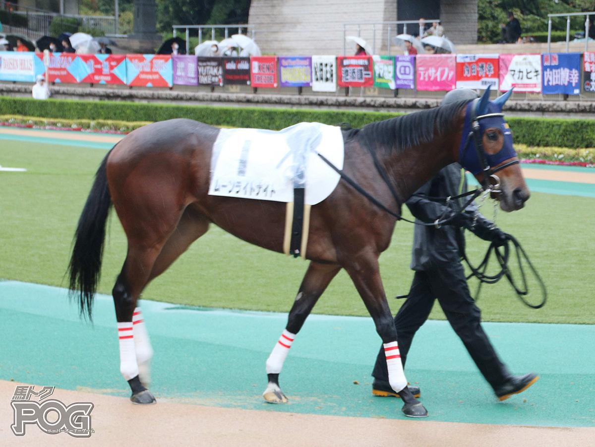 ムーンライトナイトの馬体写真