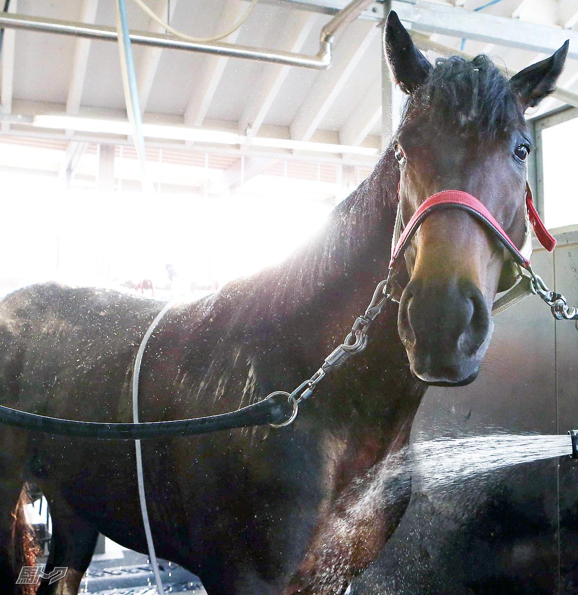 タイセイトレイルの馬体写真