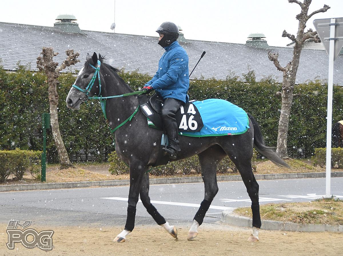 ケールダンセールの馬体写真