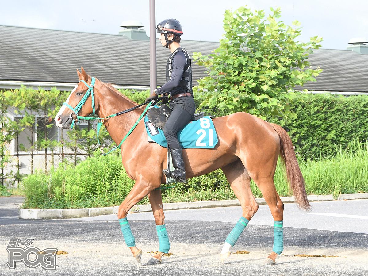 ハーツフェルトの馬体写真