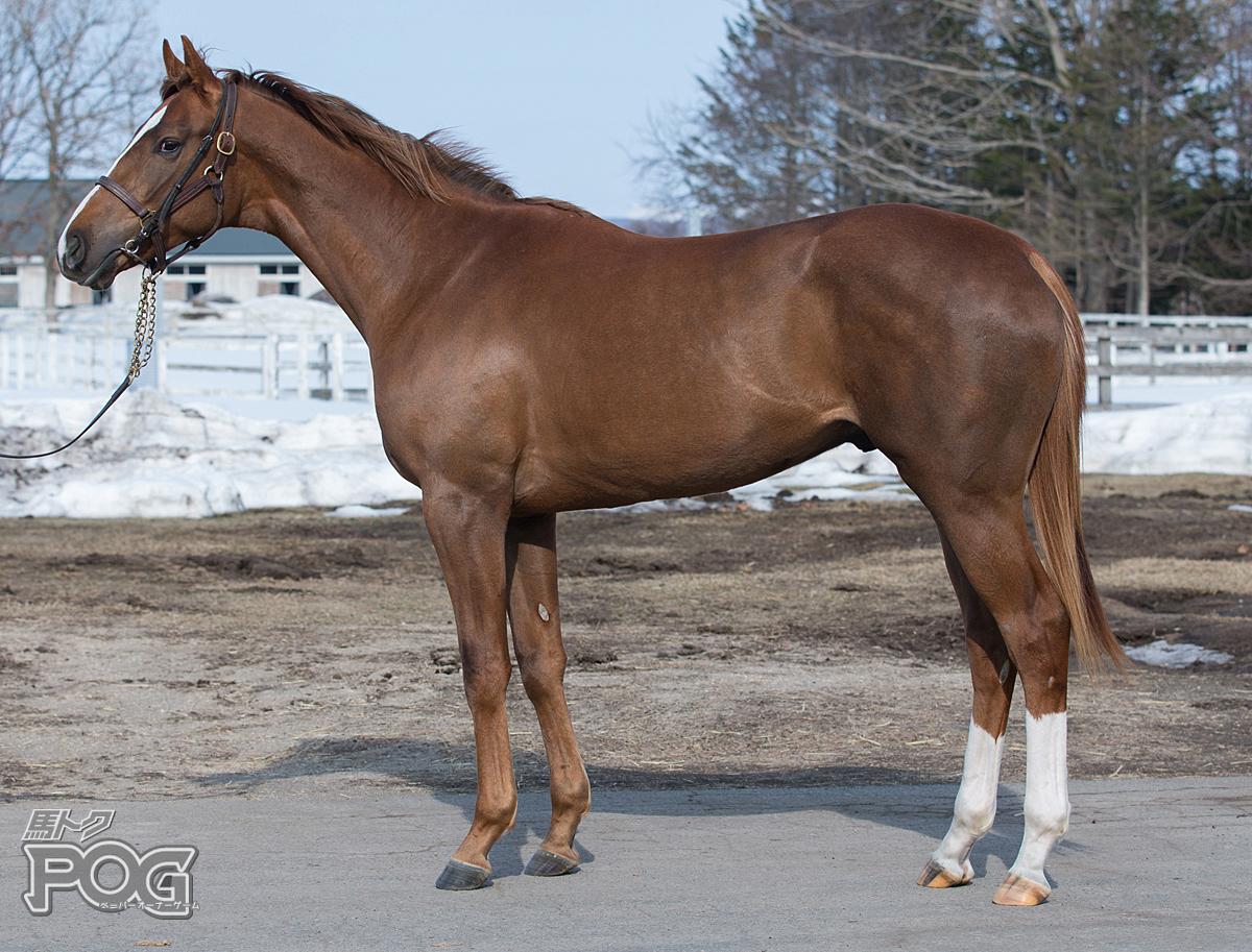 ウェルカムゴールドの馬体写真