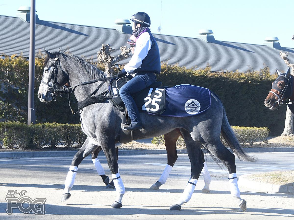ララプリムヴェールの馬体写真