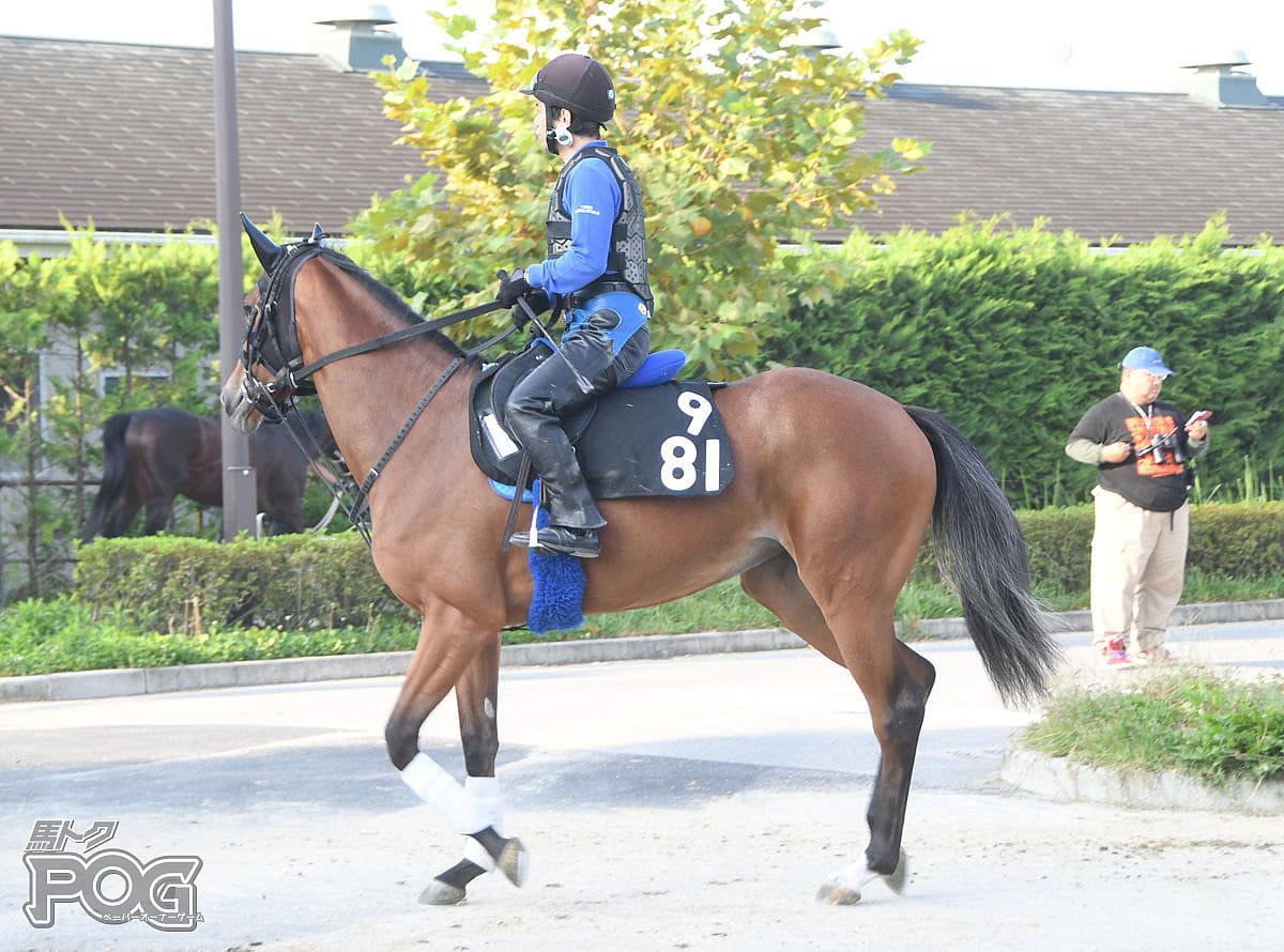 マルケッサの馬体写真