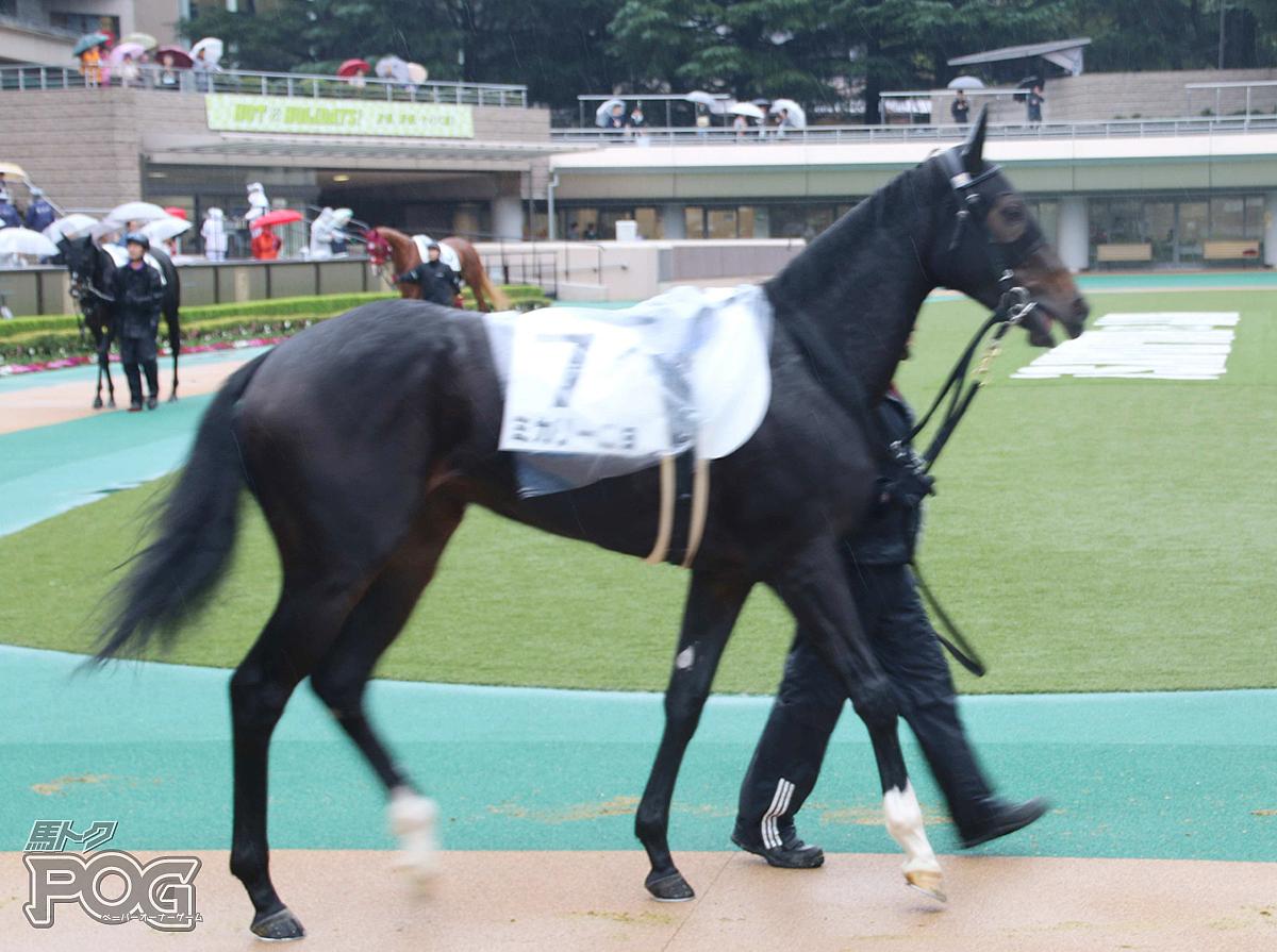 ミカリーニョの馬体写真