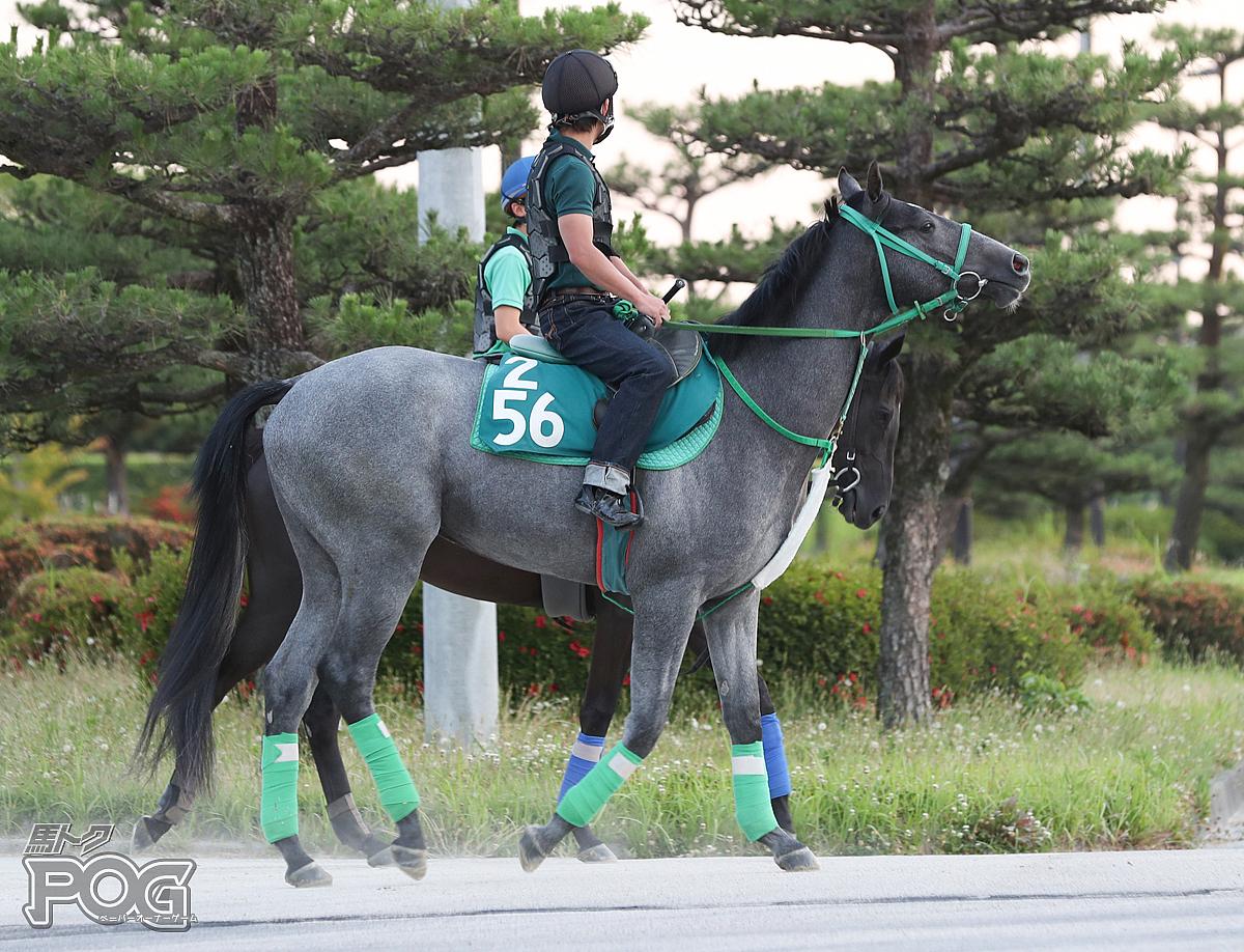 シエラネバダの馬体写真