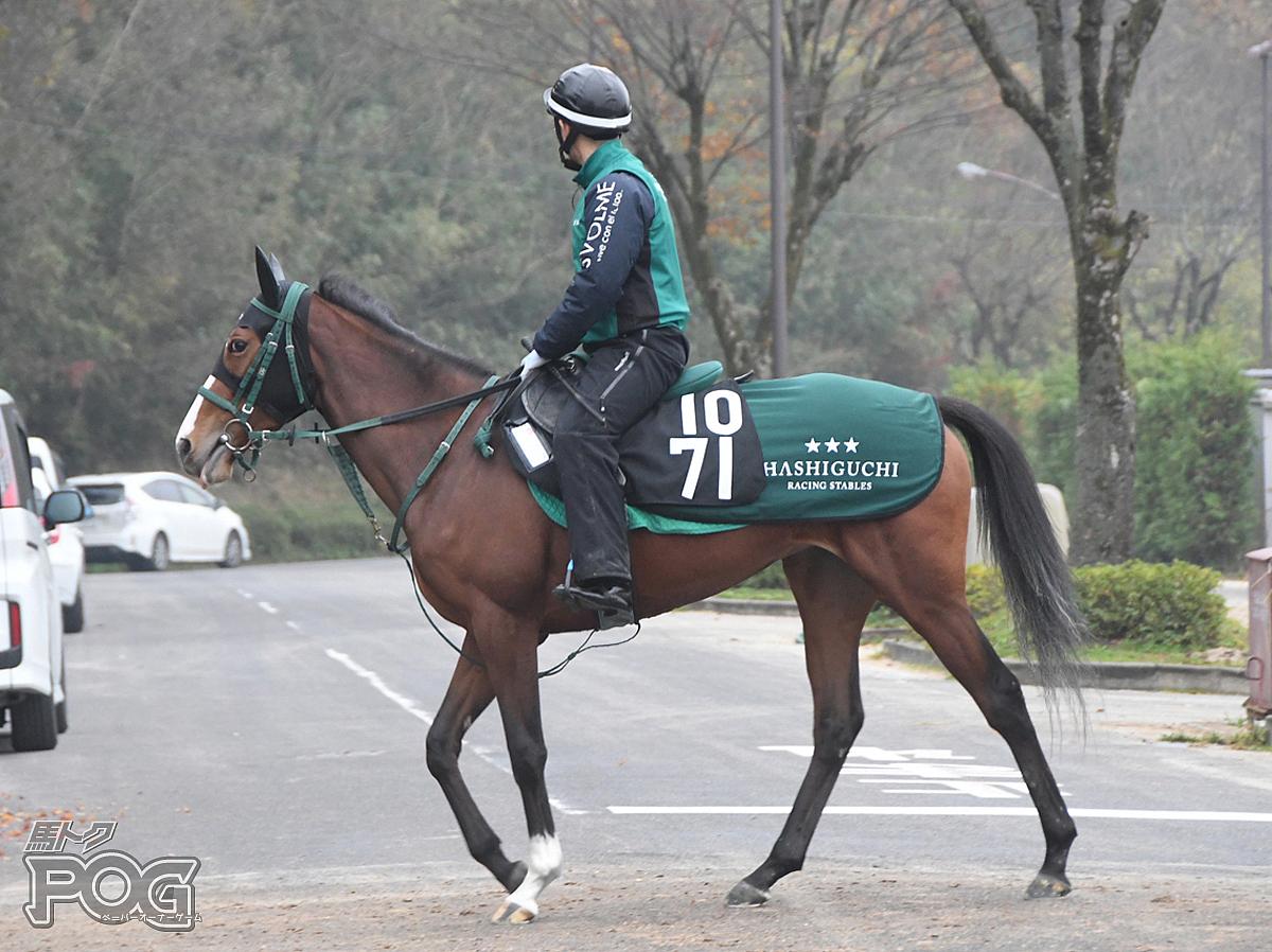 モスローズの馬体写真