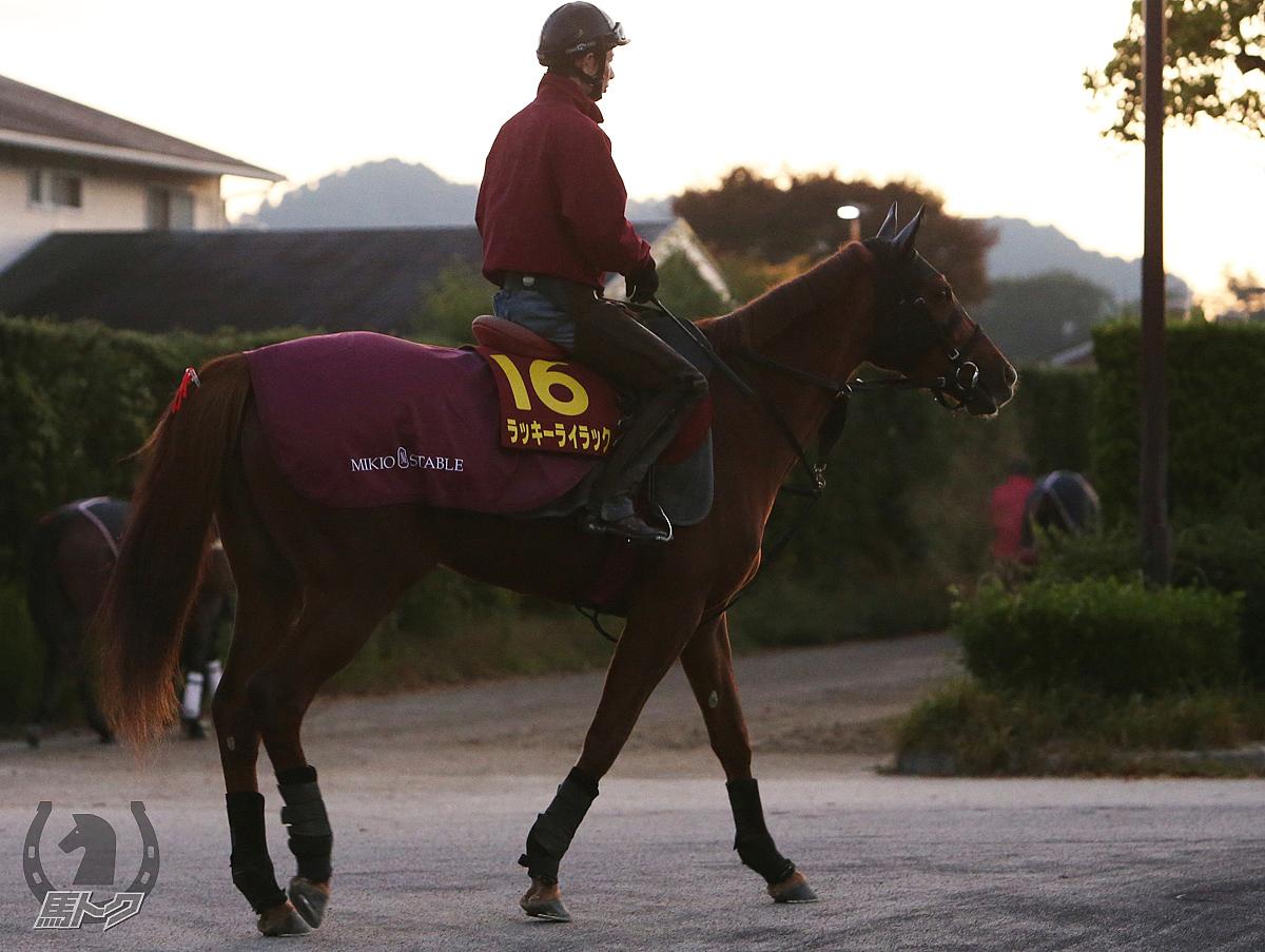 ラッキーライラックの馬体写真