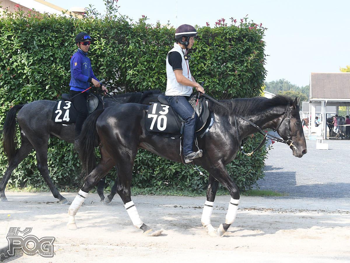 ボナヴィーゴの馬体写真