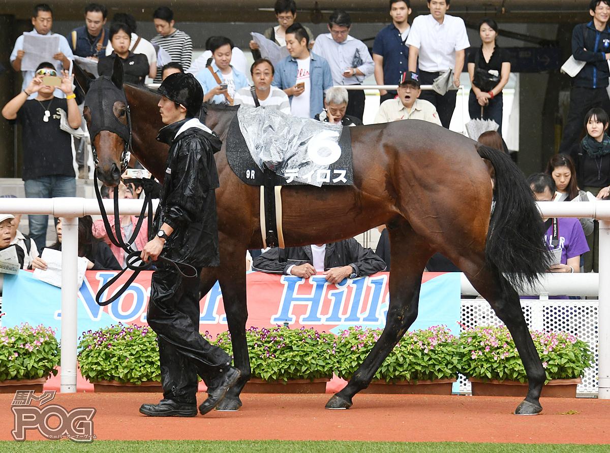 ディロスの馬体写真