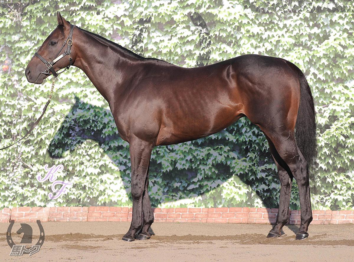 レイエンダの馬体写真