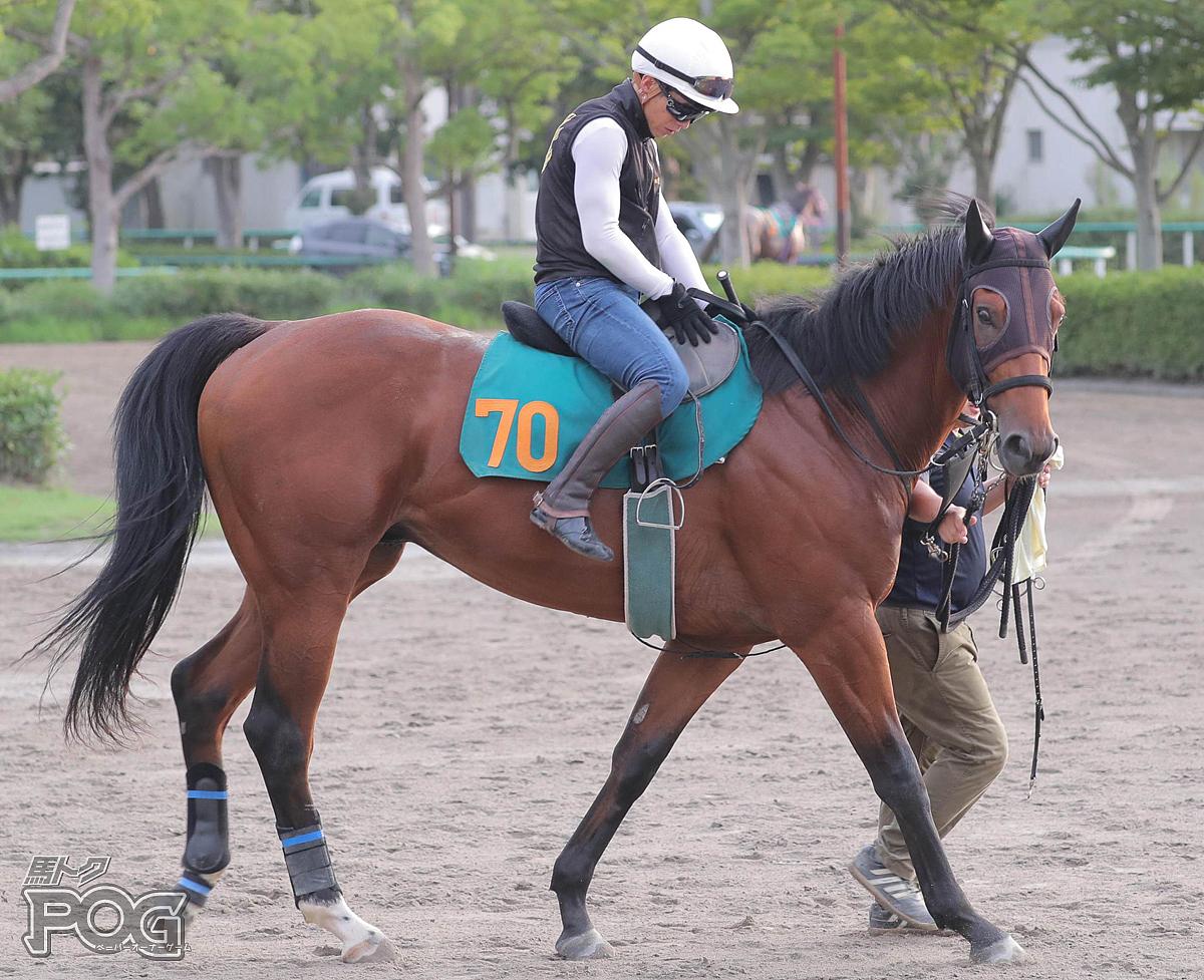 ランスマンの馬体写真
