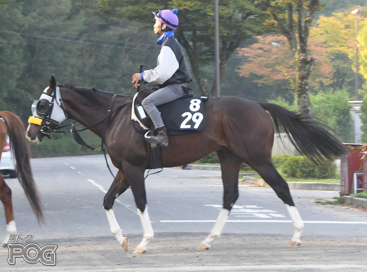 ビップヴァリアントの馬体写真