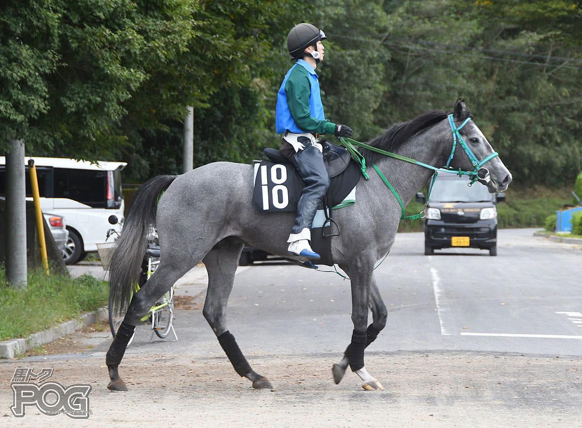 ミーティアトレイルの馬体写真