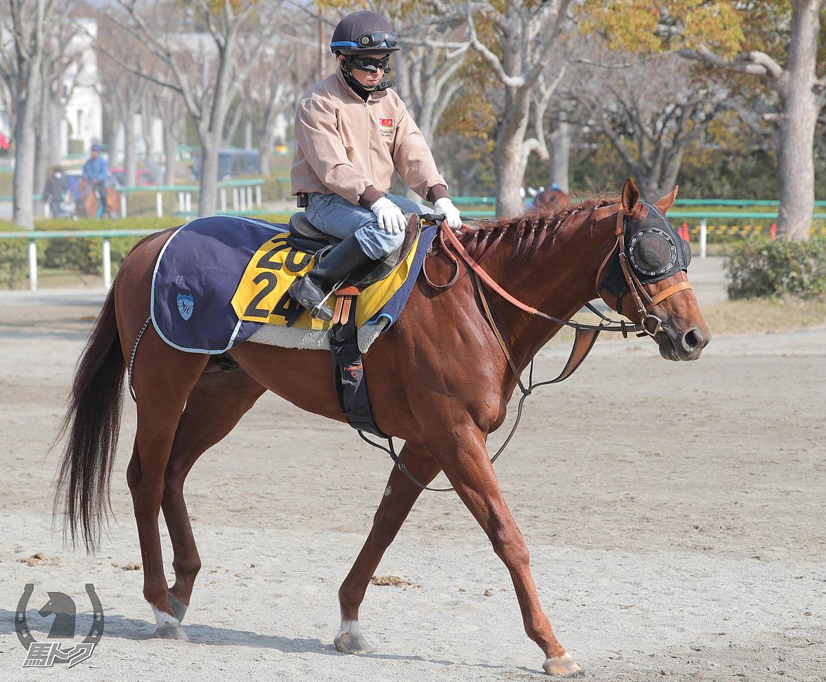 レピアーウィットの馬体写真