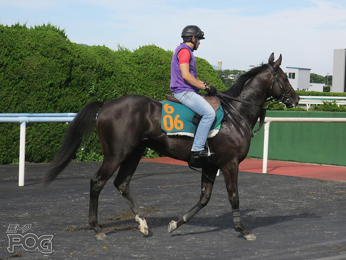 フラットレーの馬体写真