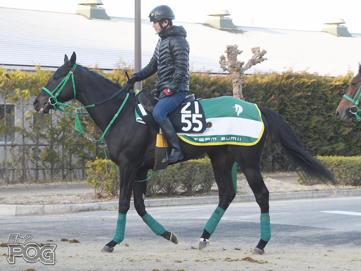 マグナレガーロの馬体写真