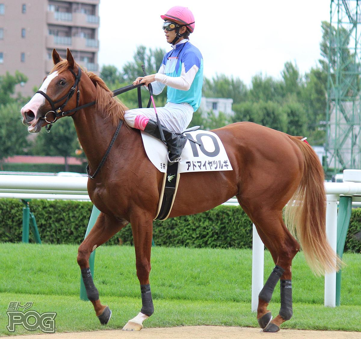アドマイヤツルギの馬体写真