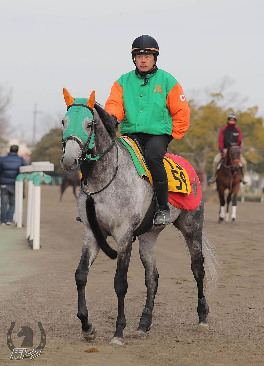 バレリオの馬体写真