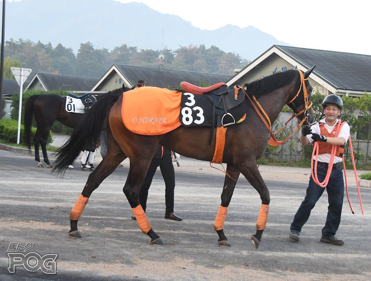 サトノコメットの馬体写真