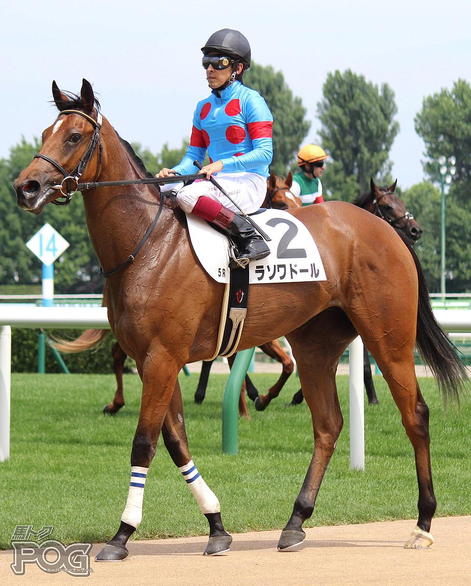 ラソワドールの馬体写真