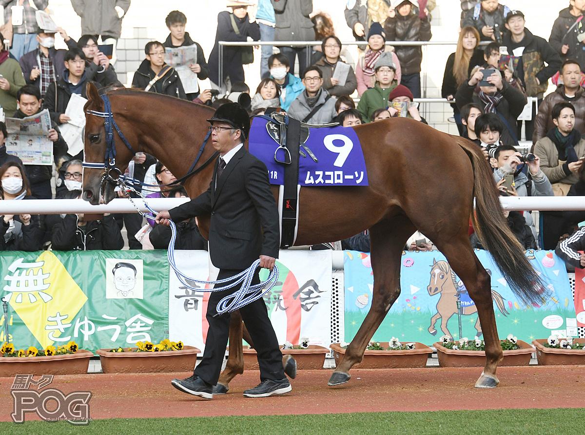 ムスコローソの馬体写真