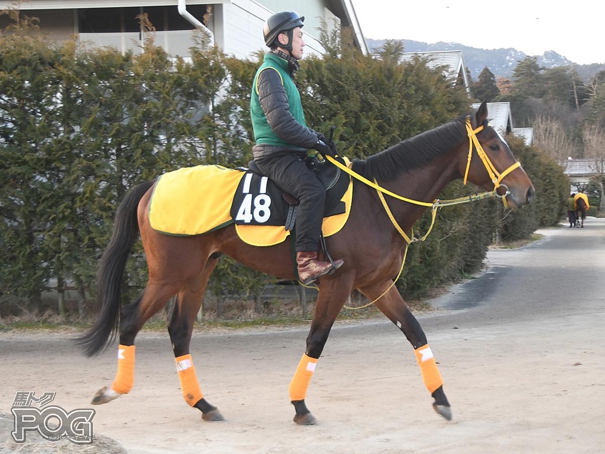 レイエスプランドルの馬体写真