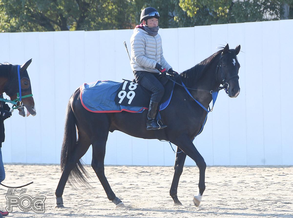 ハーベストムーンの馬体写真