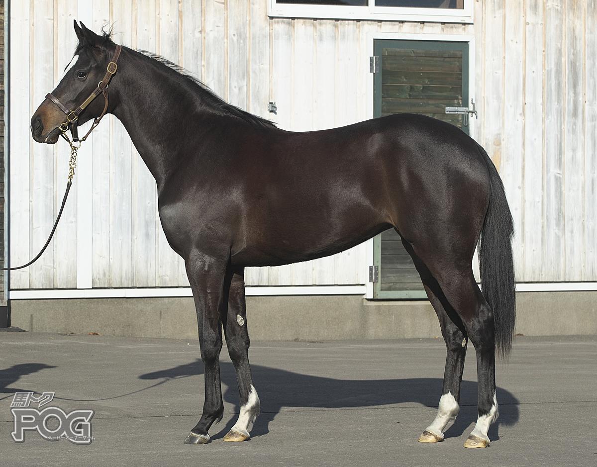 レッドベルローズの馬体写真