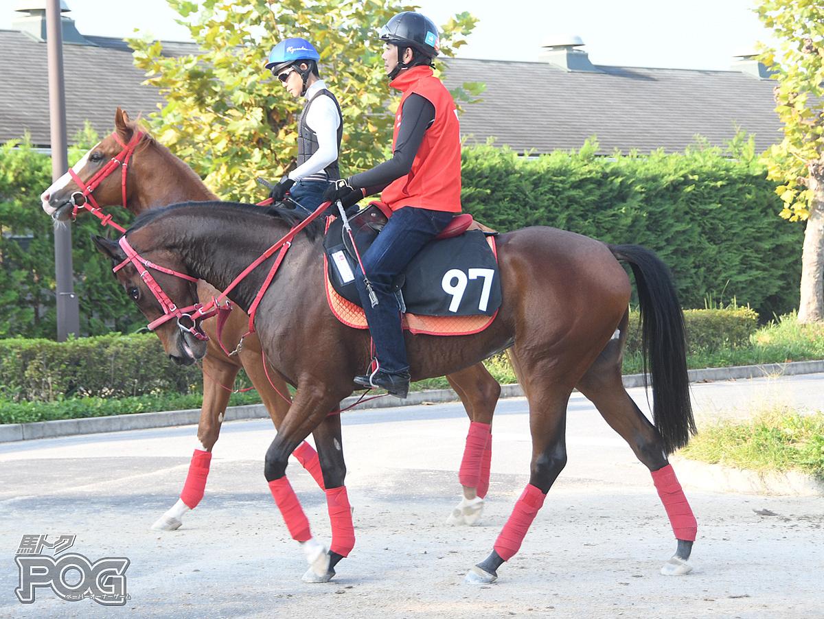 イザナミの馬体写真
