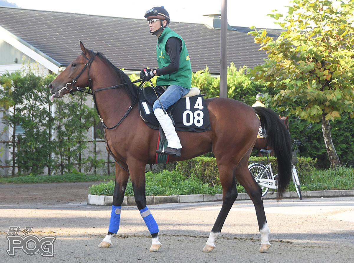 フランツの馬体写真