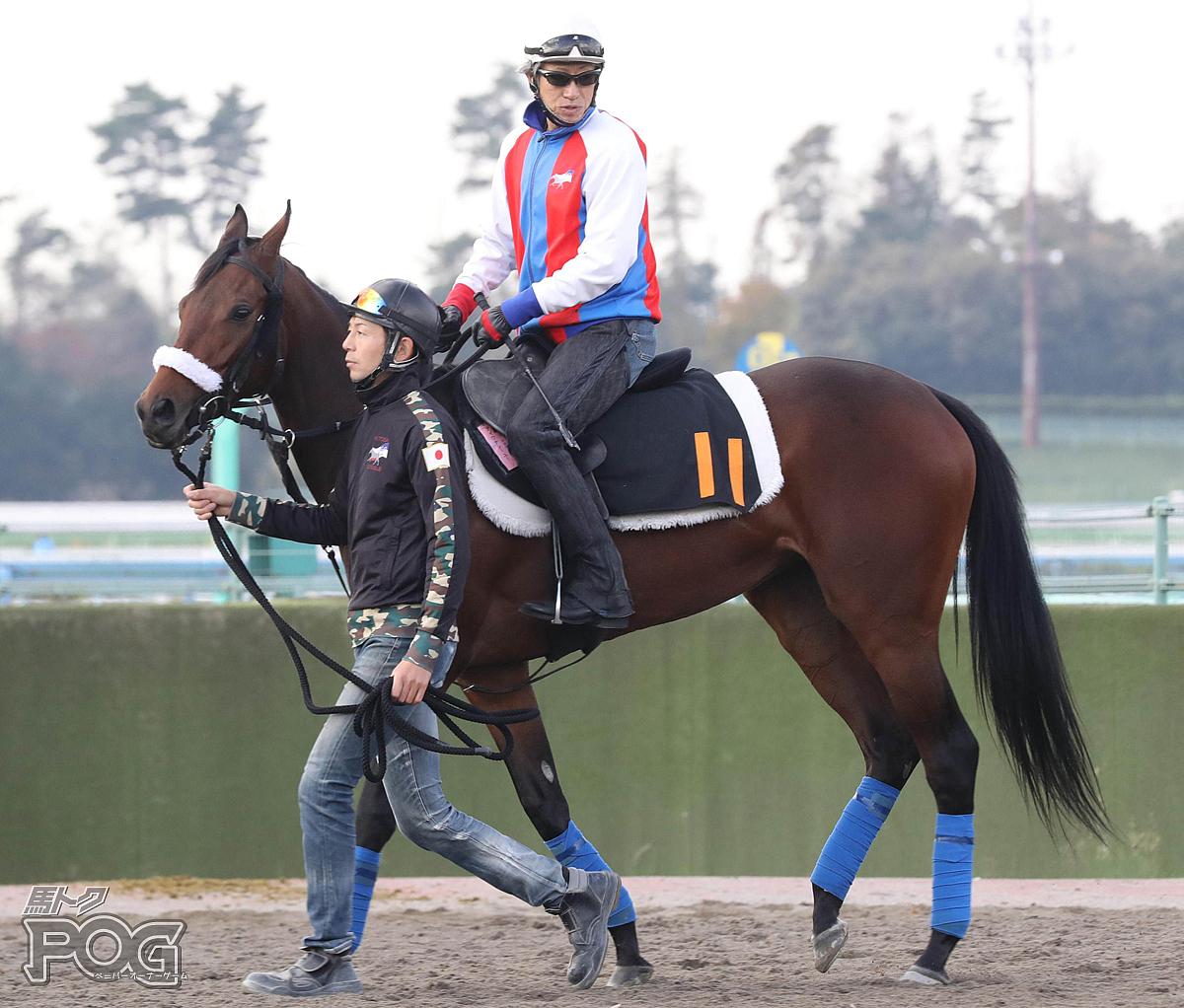 アイワナシーユーの馬体写真