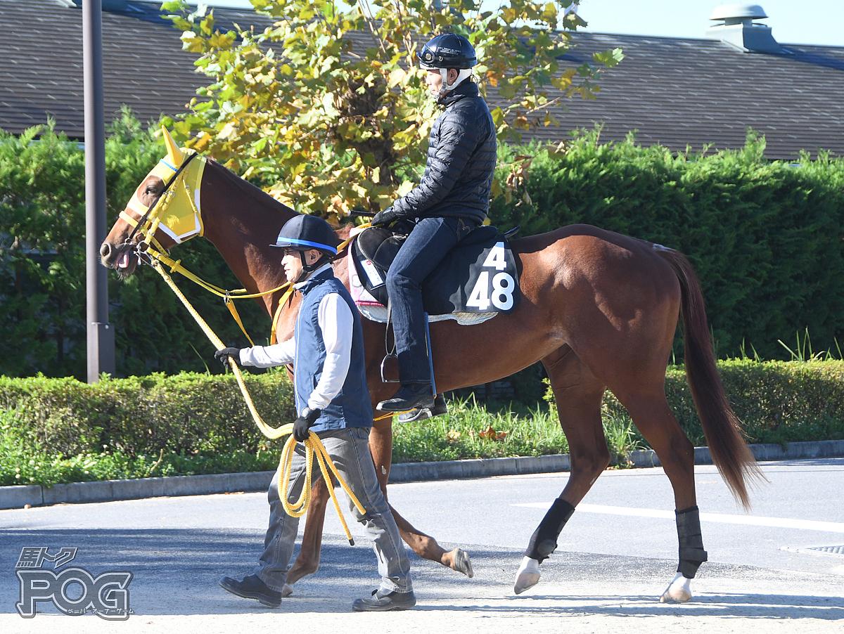 シャテーヌの馬体写真