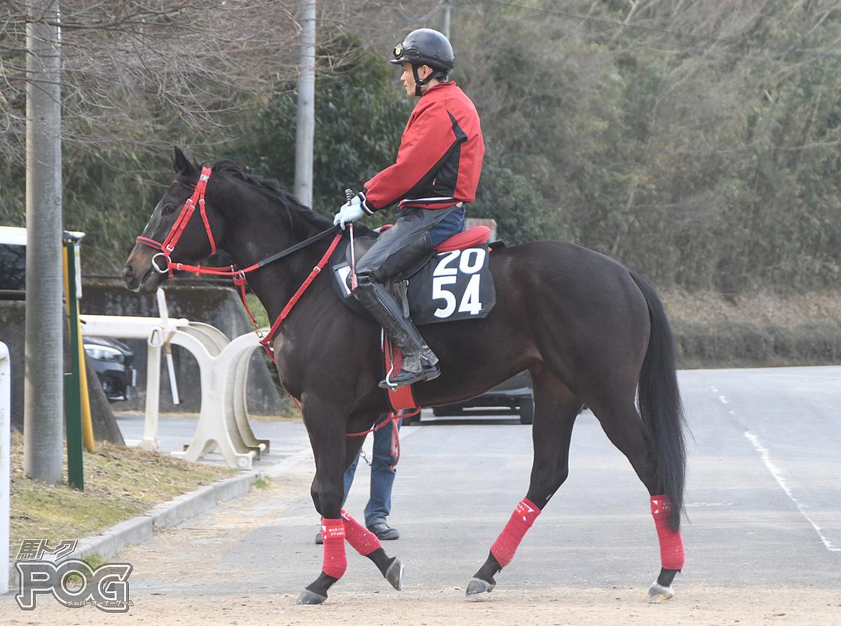 サンマルミヤビの馬体写真