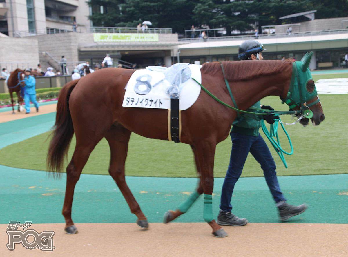 ダテノイグナイトの馬体写真