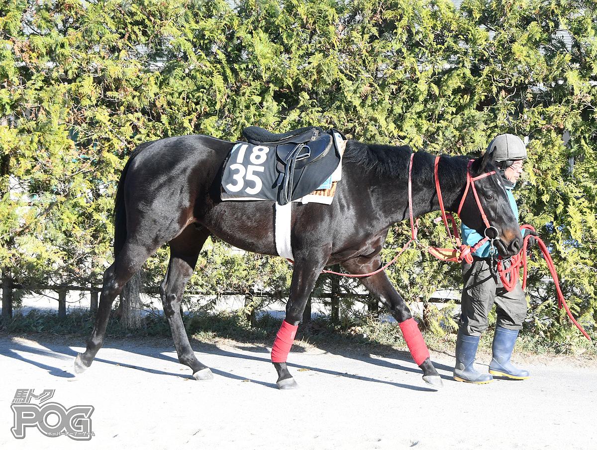 ゲンキチチカラの馬体写真