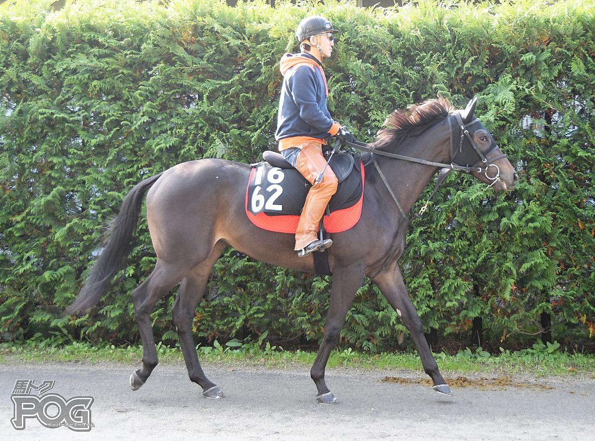 ヤマザクラの馬体写真
