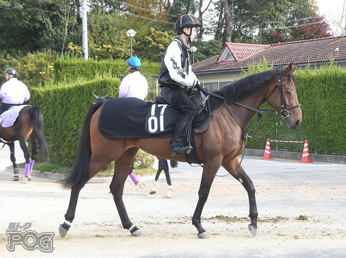 フェスタマドンナの馬体写真
