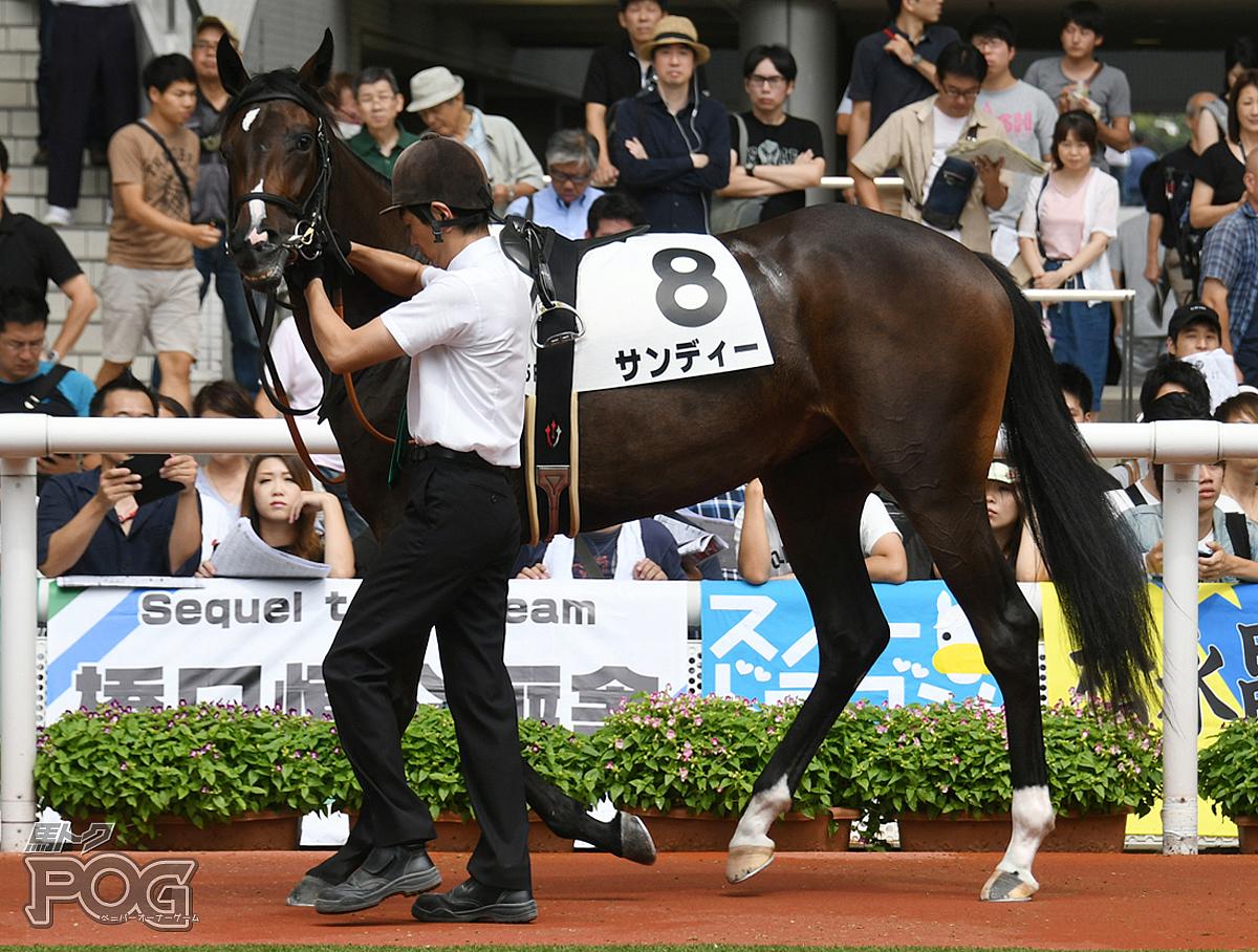 サンディーの馬体写真