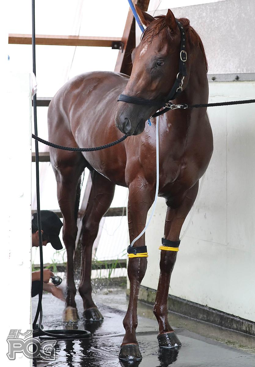 アイアンクローの馬体写真