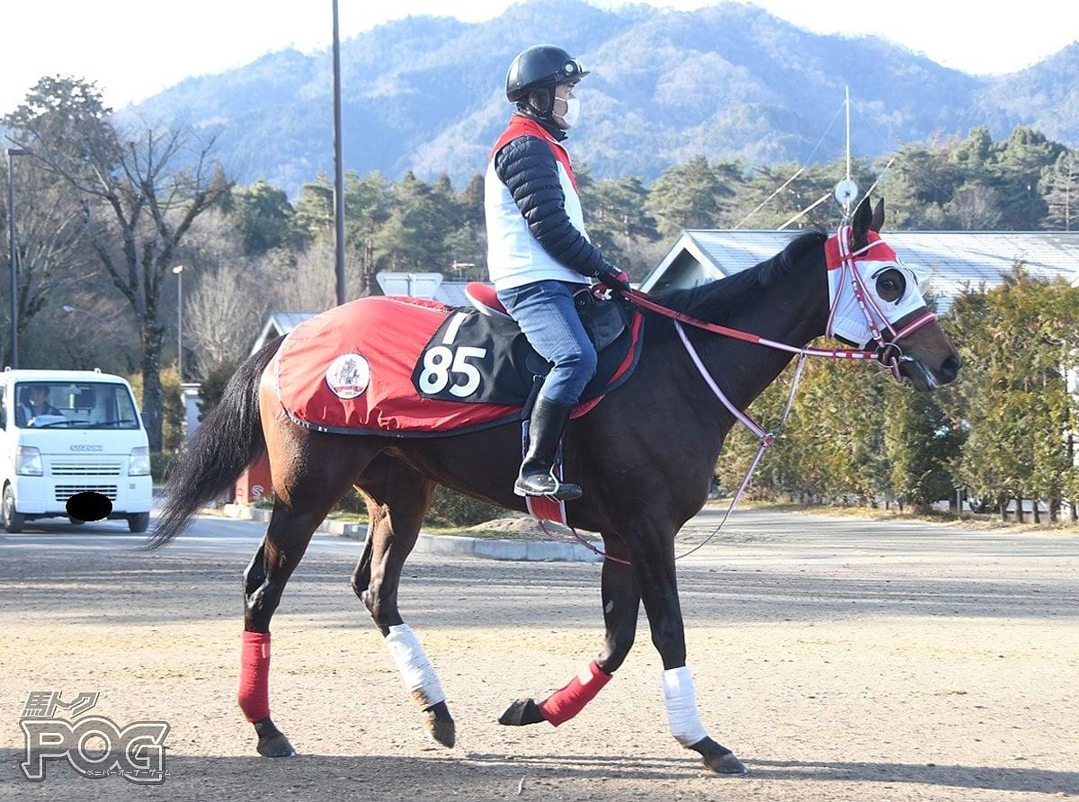 オスカールビーの馬体写真