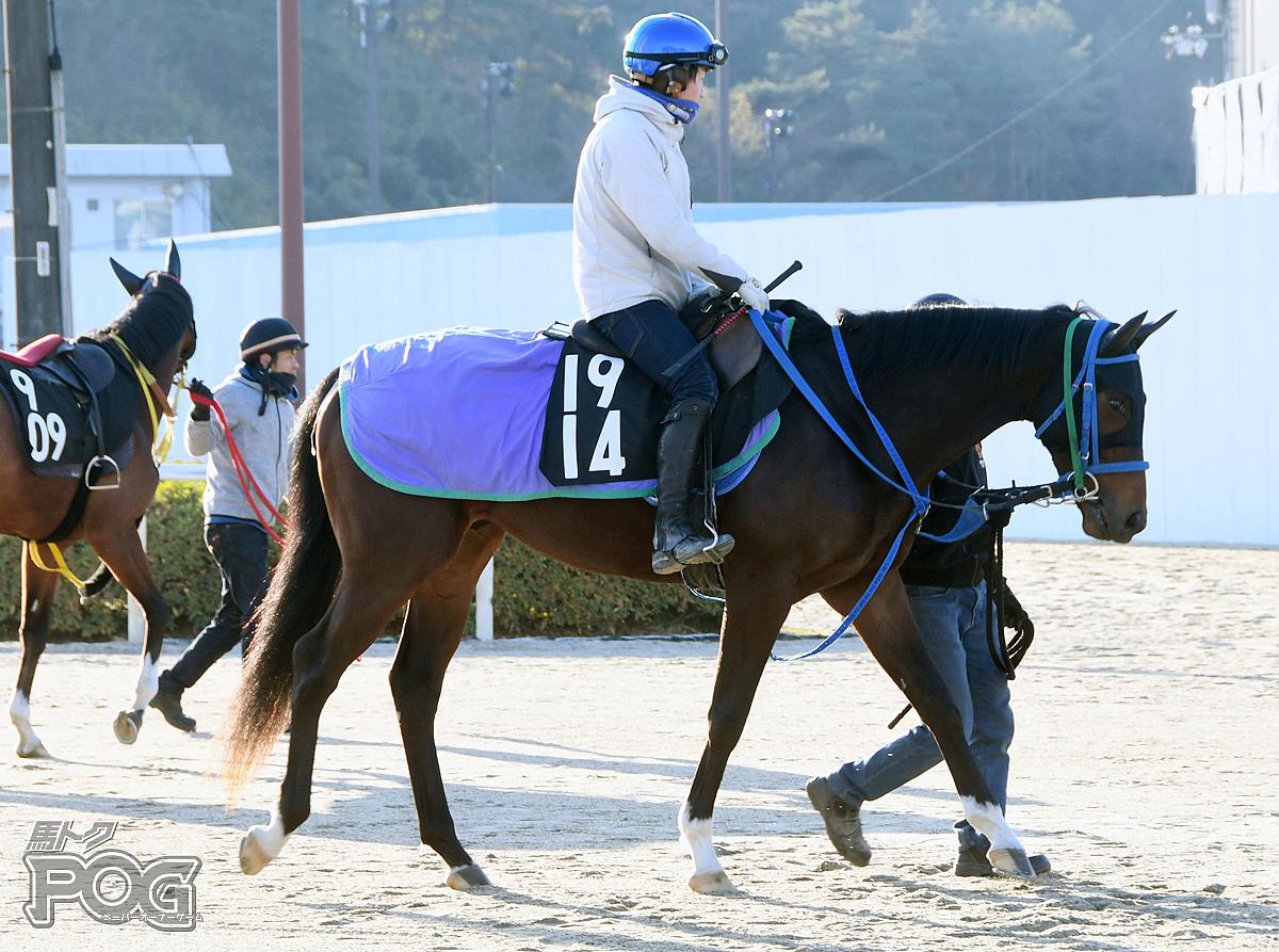 フィールインラヴの馬体写真