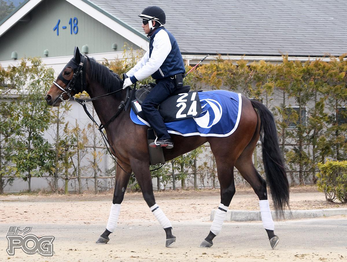 ボナリーの馬体写真