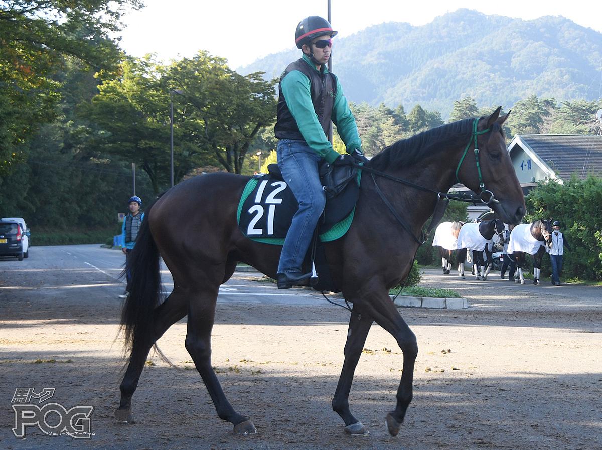 メイケイダイハードの馬体写真