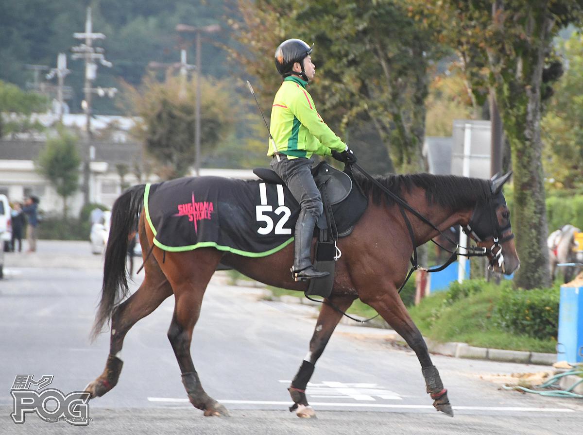 レグルドールの馬体写真