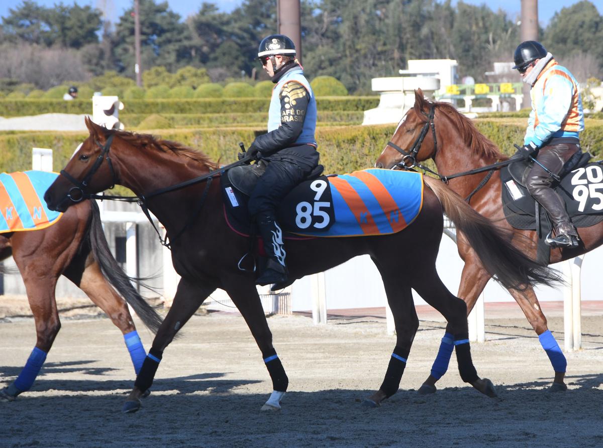 マージェリーの馬体写真