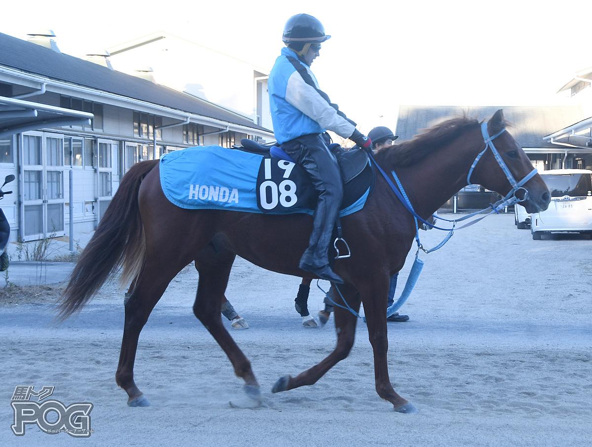 バトルハヤバセの馬体写真