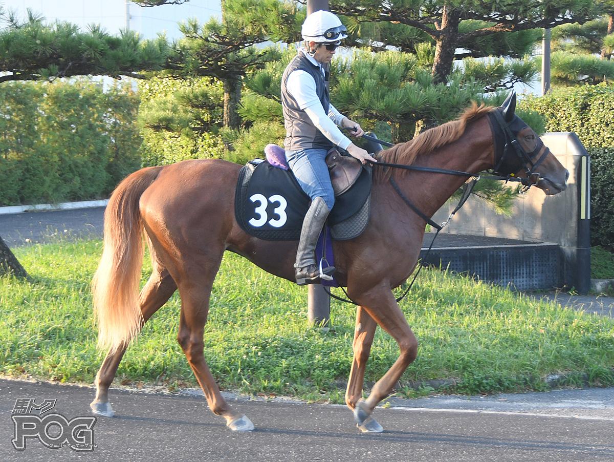 アップファーレンの馬体写真