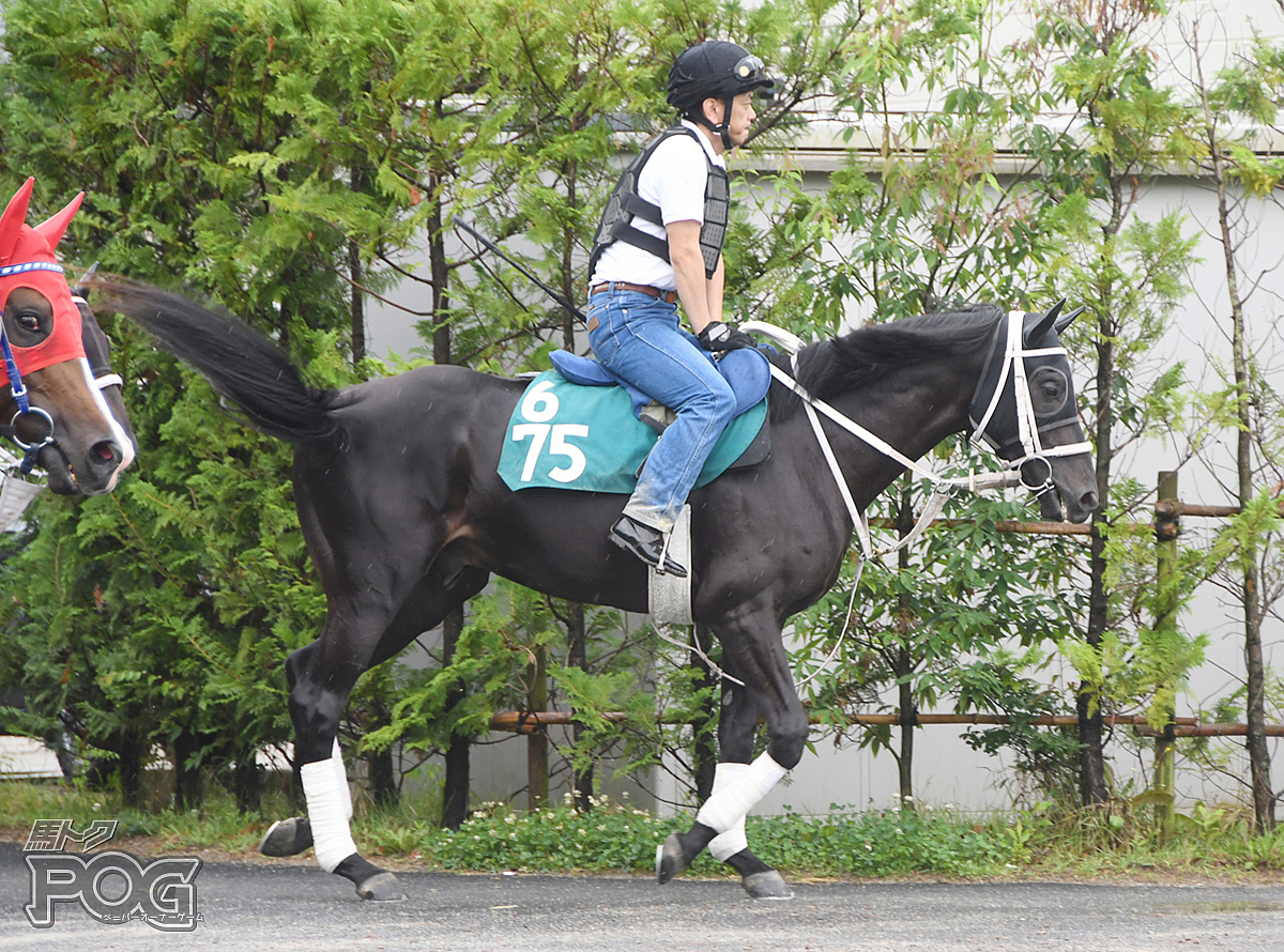 キンノイナズマの馬体写真