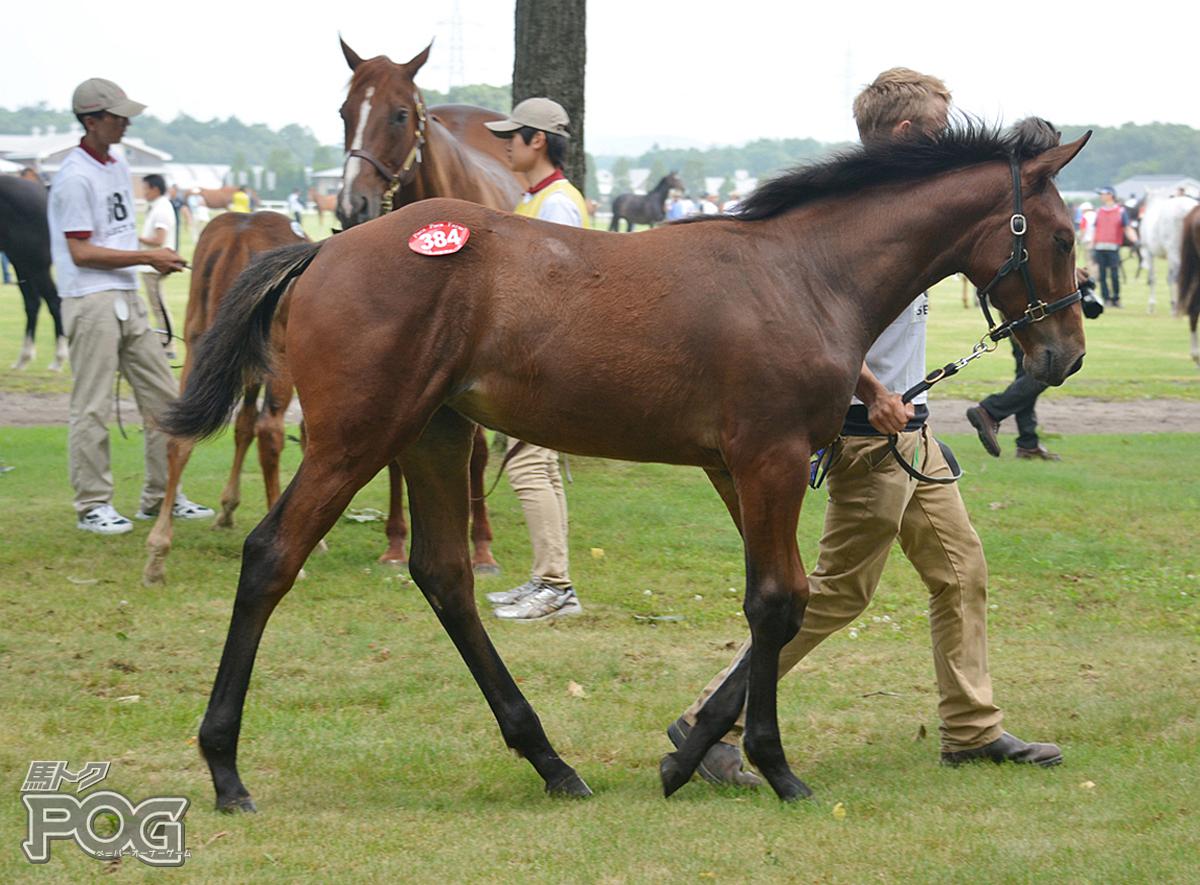 レイローの馬体写真